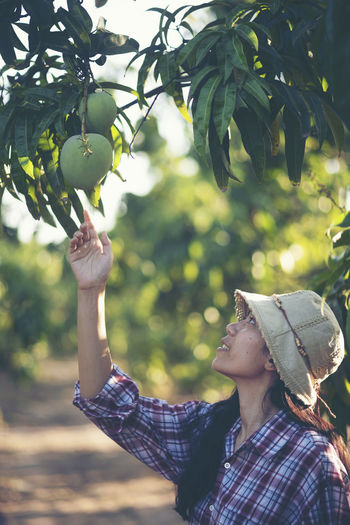 Woman looking at mango growing on tree in farm