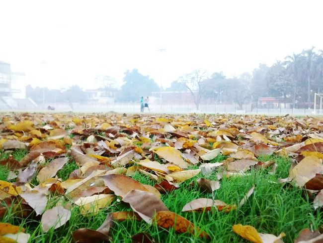Football Green Landscape Dryleaves Autumn Leaves Anything