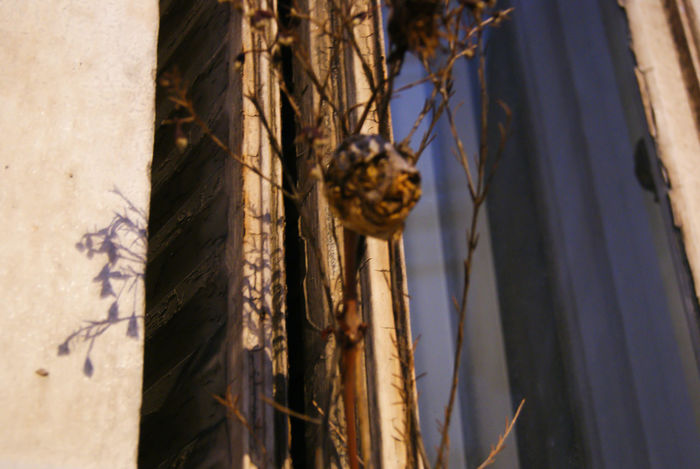 #freeday 87 EyeEm Selects Tree Close-up Sky