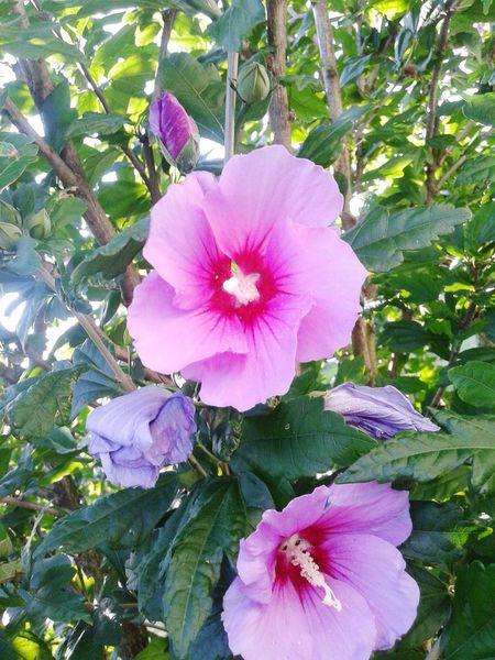 Flowers Nature Plants Hawaii Tropical