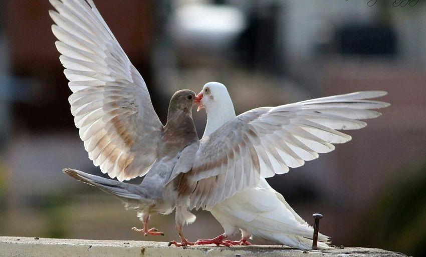 Couples❤❤❤ Soul Searching Walking Around Birds Of EyeEm  Taking Photos