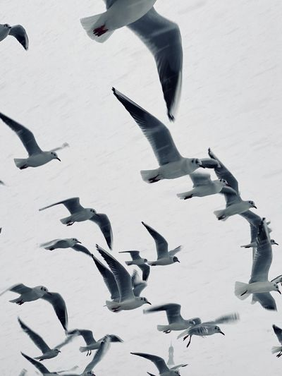 High angle view of seagulls flying