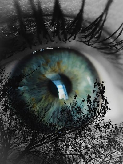 Eyes Are Soul Reflection Fine Art Photography Pivotal Ideas Trees Feminine  Beaultiful Eyes Beauty In Nature Woman Macro Blue Eyes Green Eyes Sensual Gaze Looks In Love Dramatic Portrait Eye4photography  Higher Resolution Stunning Beauty