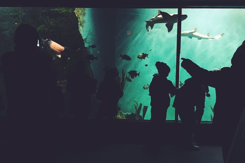 Sharks and silhouettes. Animal Themes Fish Aquarium Water Indoors  People Silhouette Children Zoo Peoplephotography People Watching Silhouettes Sharks