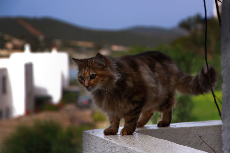 Cat on a balcony. Cats Of EyeEm Cats 🐱 Summertime Animal Themes Cat Cat Lovers Cat Photography Catlovers Catoftheday Cats Catsagram Cat♡ Day Domestic Animals Mammal Nature No People One Animal Outdoors Pets Summer