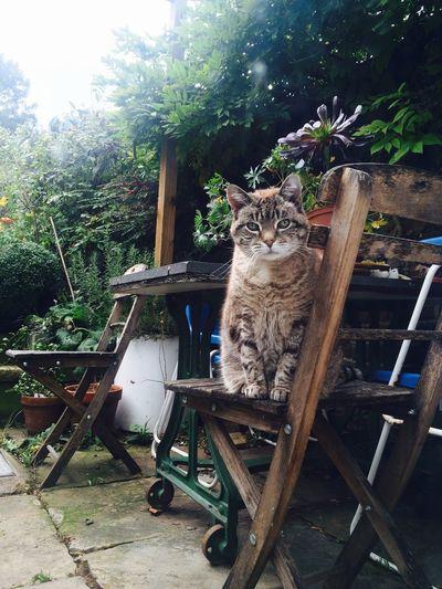 Millythecat Cat Nature