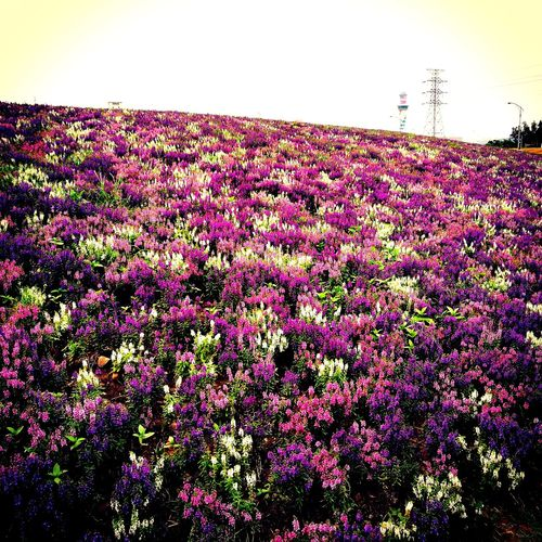 神の領域⛩️ Flower