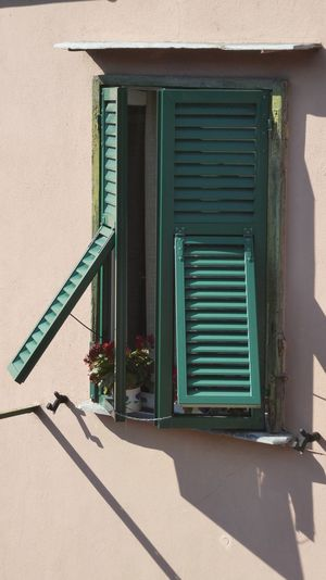 green wooden shutters open for red flowers Window Shutters Green Shutters Wooden Shutters EyeEm Gallery Mediterranen Style Red Flowers At Window Open Shutters Apricot Fascade Part Of Building Selective View Still Life Photography Genoa, Italy, Europe, Liguria Shadow Sunlight Door Architecture Building Exterior Built Structure Shutter Façade Place Of Interest