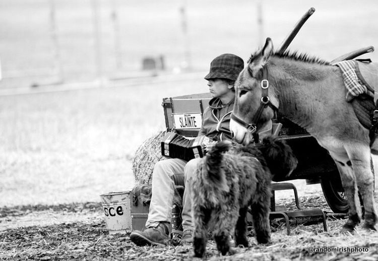 Mmmm. Greeting some of the many at yesterday's Ploughing Championships 2014 Mono Chrome Black And White EE_Daily: Black And White