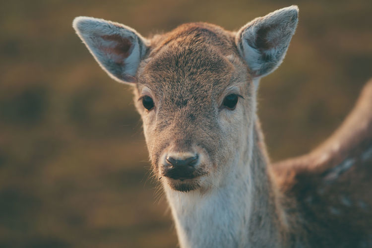 Tierpark in Weeze Animal Photography Animal Themes Animal Wildlife Animals In The Wild Day Deer Nature One Animal Outdoors