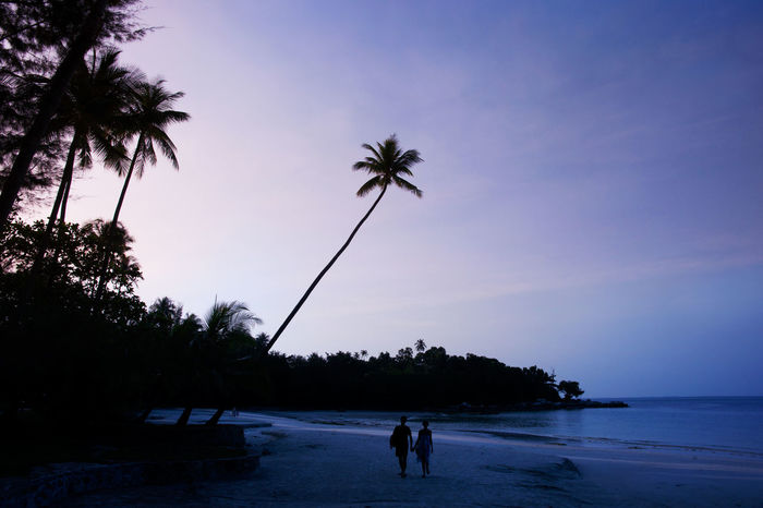Couple in love walking on a purple blue colored sunset exotic palm beach. Beach Beach Photography Clear Sky Couple - Relationship Couple In Love Couple In Silhouette Leisure Activity Love Nature Nightfall Outdoors Palm Tree People Real People Romantic Beach Romantic Place Romantic Walk Sea Silhouette Sunset Togetherness Tranquil Scene Tropical Paradise Two People Vacation Time