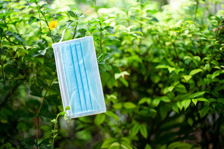 Close-up of clothes hanging on plant in yard