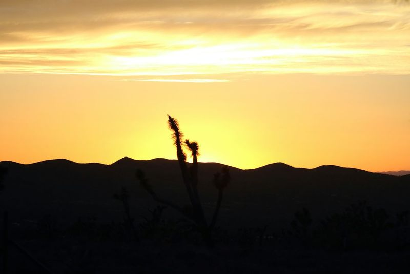 Sunset in desert! 🌞Sunset Landscape Sunset Silhouettes Sunset In Desert Sunset In The Mountains Cactus Tree Silhouette Minimalist Nature Tranquil Scene Majestic Orange Color Beauty In Nature Scenics Tranquility Mountain in Arizona USA