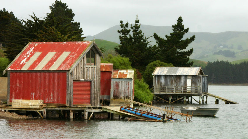Old Boathouse Weather Beaten Boathouses New Zealand Otago Peninsula