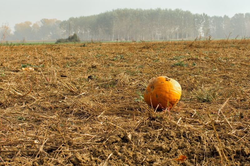 Autumn colors Land Field Plant Nature Day No People Autumn Mood Landscape Pumpkin Food Environment Agriculture Outdoors Vegetable Healthy Eating Focus On Foreground Tranquility Dry