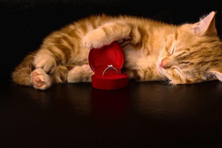 Cat and diamond
