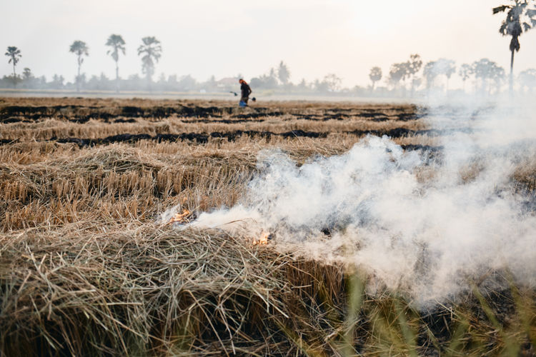 Smoke emitting burning grass on agricultural field