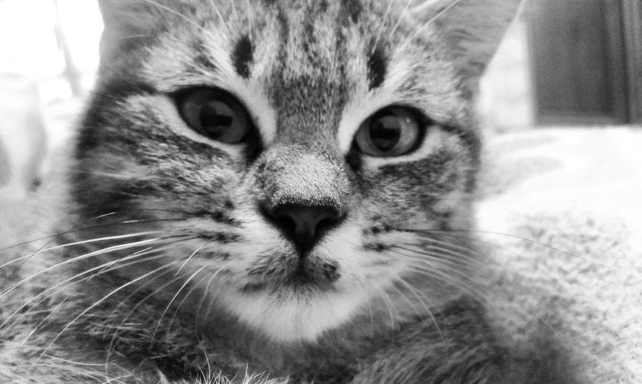 Cheese! Lovely Cat Cats Of EyeEm Sweety Cat Cat Cat Lovers Lovely Captured Moment Hello World