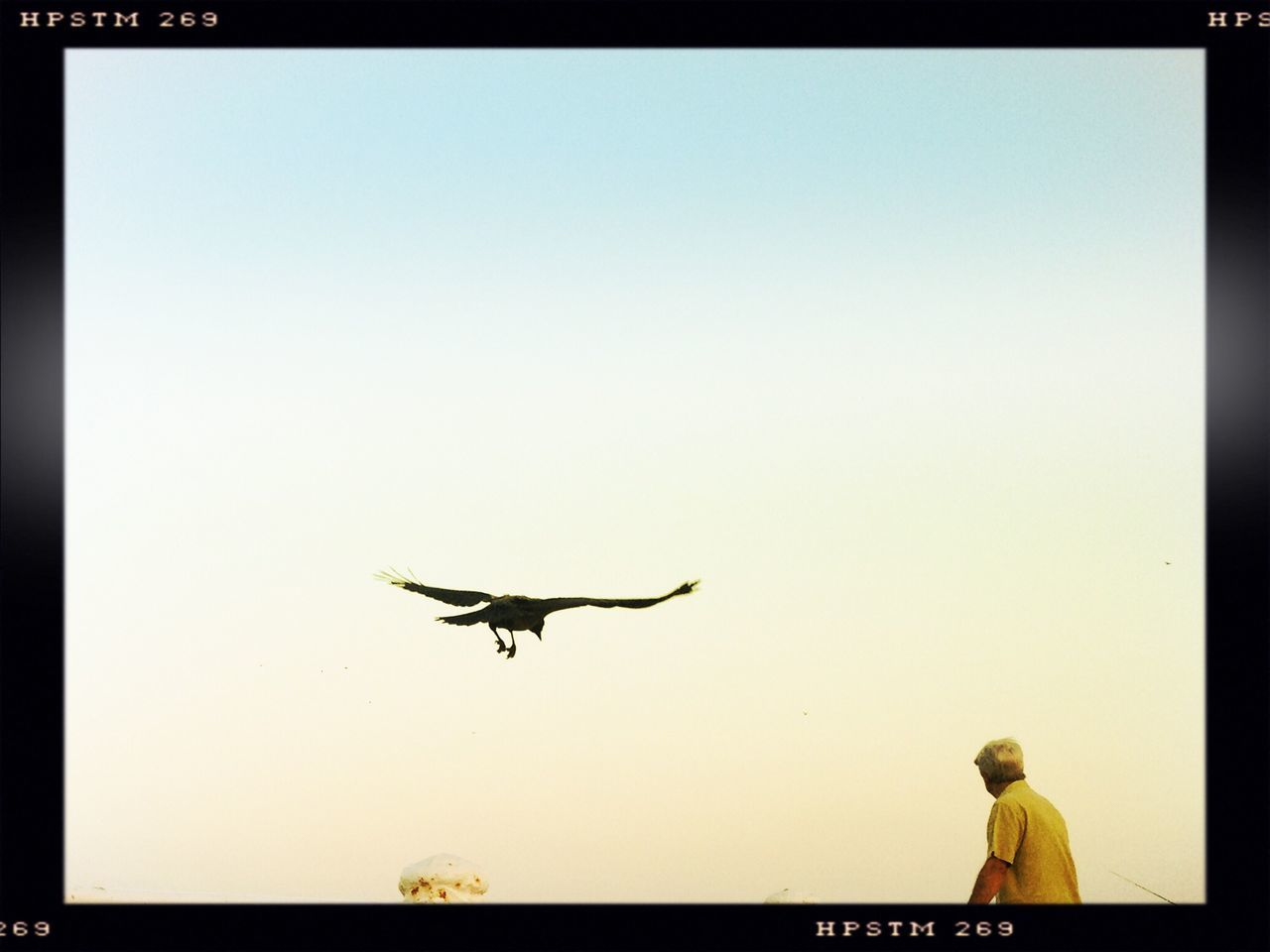 clear sky, copy space, flying, silhouette, outdoors, one animal, men, day, sky, bird, statue, real people, animals in the wild, full length, spread wings, nature, one person, people