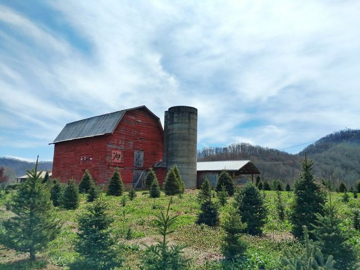 Red Barn on a Tree Farm! Red Barn 7up Sign Old Buildings Cloud - Sky Tree Farm Pine Trees Out In The Country Outdoors Nature Freshness Growth EyeEm Gallery EyeEm Nature Lover Cell Phone Photography
