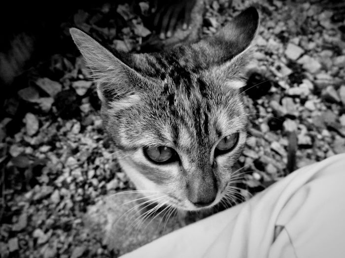 What can you see in their eyes Domestic Cat Pets One Animal Domestic Animals Portrait Animal Themes Looking At Camera Close-up Whisker Cute Mammal Eyes Pet Portraits