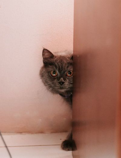 Kitten EyeEm