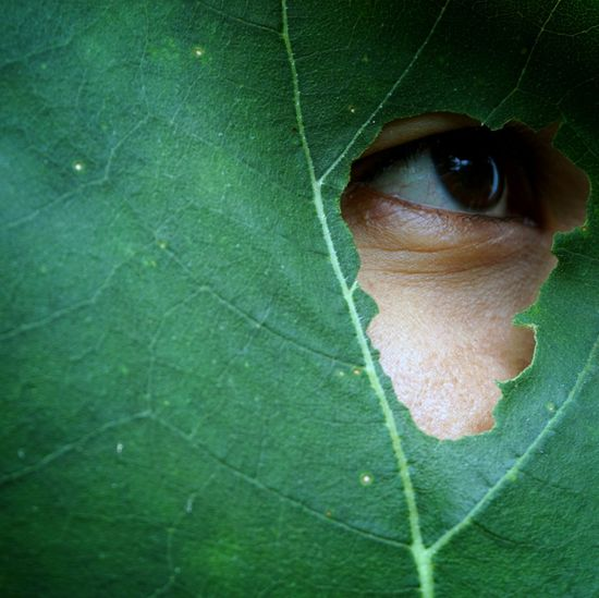 Close-up portrait of man with green leaf