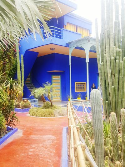 Blue House Ysl Yves Saint Laurent Morocco Marrakech Garden