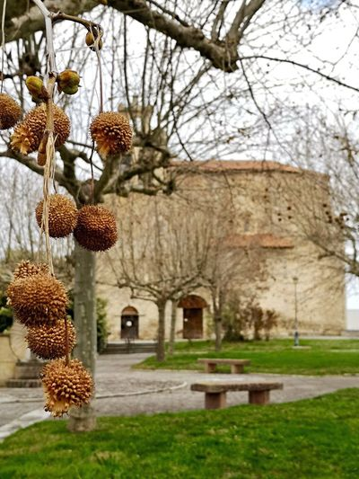 Plant Architecture Tree Built Structure Building Exterior Nature No People Day Outdoors History Tranquility Beauty In Nature