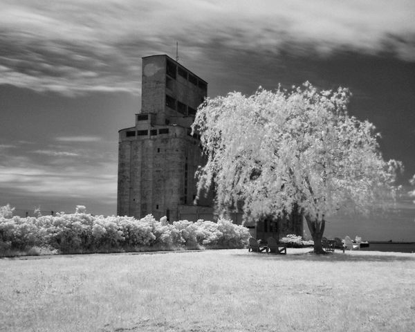 Tree Sky Built Structure Architecture Building Exterior Outdoors Nature Cloud - Sky Day Growth No People Beauty In Nature Grass Black And White Infrared