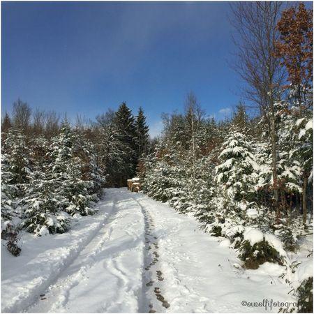 Spazieren gehen am Sonntag nach Neuschnee 💕💗 Monique52 Wald Schnee Südschwarzwald Hochrhein