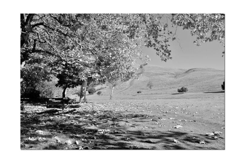 Garin Regional Park 6 Garin Ranch Rolling Hills Bnw_friday_eyeemchallenge Nature Autumn Hayward,Ca Beauty In Nature Trees Leaves🌿 Leaves On The Ground Hiking Trails Picnic Table Monochrome Photograhy Monochrome Black & White Black And White Photography Black And White Black And White Collection  Landscape_photography Landscape_CollectionLandscape Shadows Lush Valley Steep Canyons
