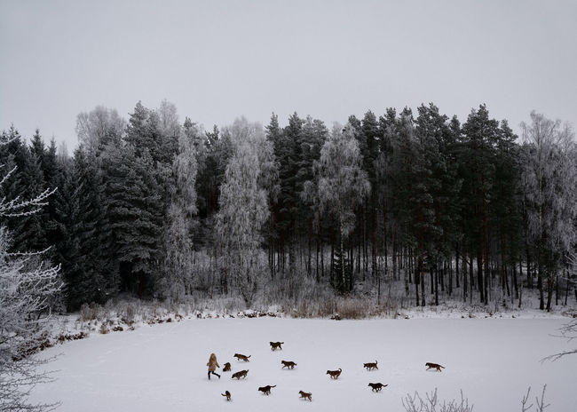 Winter's Tale Alone Attack Danger Dogs Forest Frozen Lake Hunting Linas Was Here Running Girl Snow Winter Wolf Gang Woods #FREIHEITBERLIN The Great Outdoors - 2018 EyeEm Awards