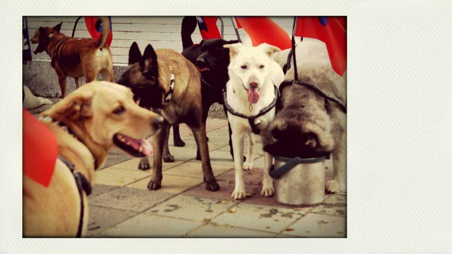 Dogs Doggy GF2
