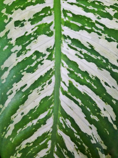 Green Color Leaf Growth Nature Full Frame Close-up Leaves Leafs Beauty In Nature Plant Freshness Patterns Of Nature Stripes Pattern