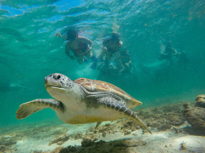 Sea Underwater Animals In The Wild Animal Wildlife Water Animal Themes Swimming Animal Sea Life Marine UnderSea One Animal Turtle Nature Vertebrate Reptile No People Sea Turtle Turquoise Colored