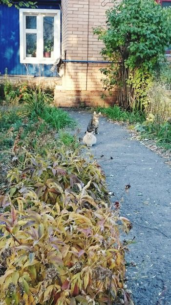 Check This Out Taking Photos Hello World Old Photo Cat♡ Cats Auntumn Streetphotography Eeyem Photography No Edit/no Filter привет мир староефото Осень 🍁🍂 улица кошки