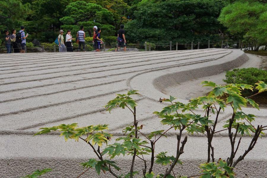 Zen Garden Architecture Zen Garden Zen Tree Growth Nature Large Group Of People Plant Outdoors Day