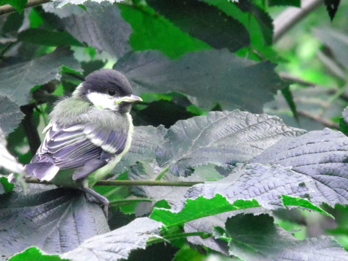 Animal Themes Animals In The Wild Beauty In Nature Bird Close-up Day Growth Leaf Nature No People One Animal Outdoors Perching Plant
