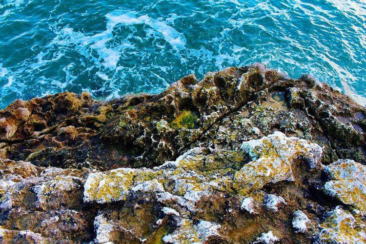 Seashore Ocean