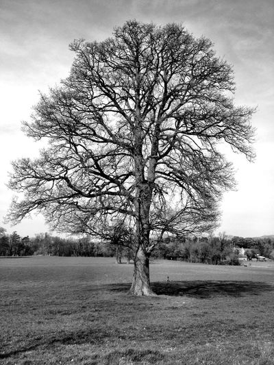 Nature Tree Black And White