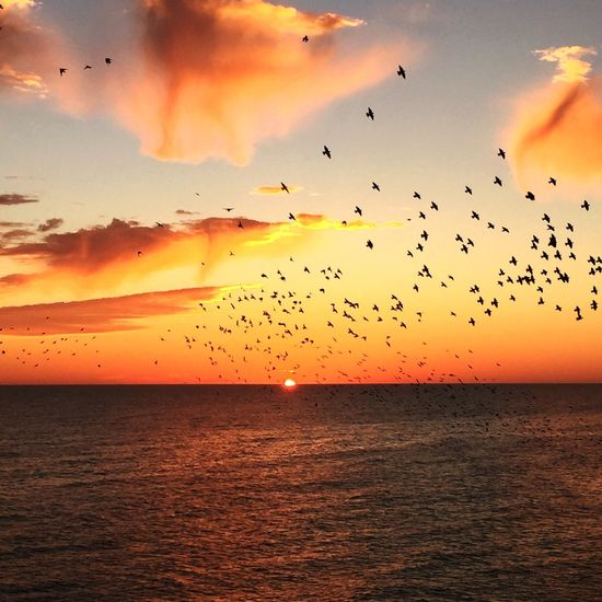 Sunsets Orange Sky Sea And Sky Sea Formation Flying Birds England Sun Horizon Clouds Seaside Coast Brighton Murmuration Starlings Sunset Orange Color Sky Beauty In Nature Nature Dramatic Sky Flock Of Birds