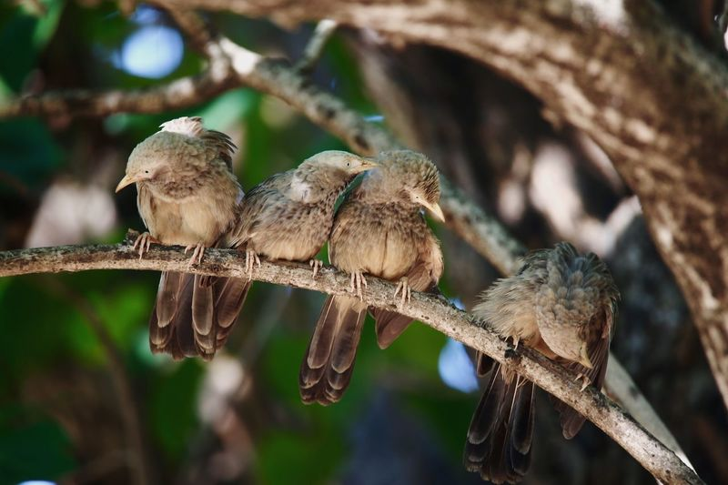 Close-Up Of Young Birds On Branch
