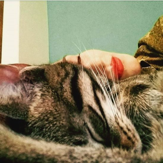 Pet Portraits Catwoman Cats Eyes Closed  Moustaches Sleeping Close-up Domestic Animals Pets