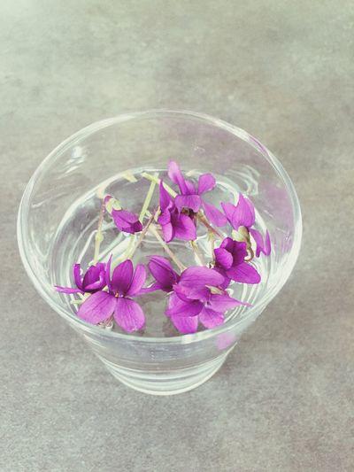 Mon Bonheur ❤ du Jour Violettes Sauvage dans mon Jardin