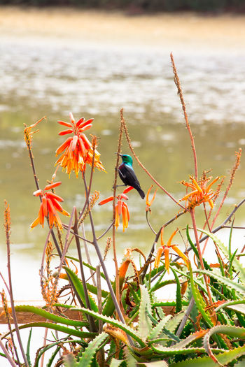 Bird perching on plant