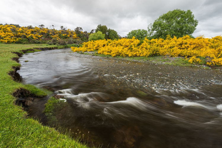 View of yellow flowers on riverbank