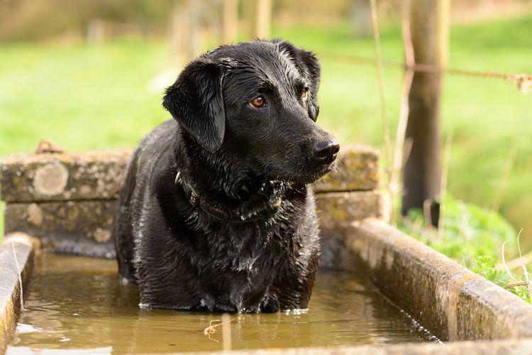 Close-Up Of Wet Black Dog Outdoors