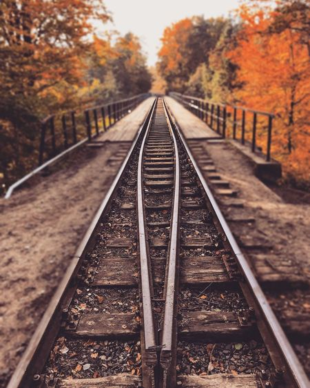 Railroad Tracks Amidst Trees During Autumn
