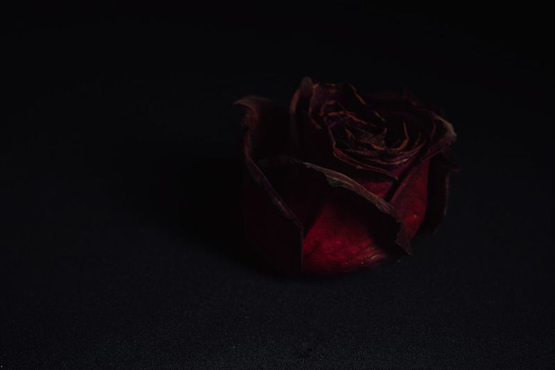 a heart of darkness Rose Petals Petals Alone Nature Flower Rosé Stark Minimal Simplicity Isolation Indoors  Red Still Life Close-up Studio Shot Single Object Beauty In Nature